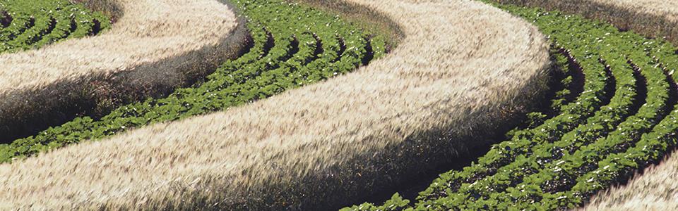 Biomasse et stratégie forestière